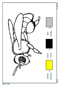 Colouring Sheet - Bee